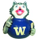 Washington - Harry the Husky